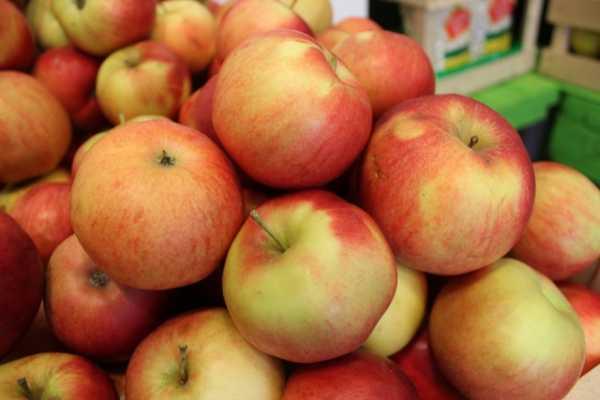 Белорусские яблоки снова будут поставляться в Россию