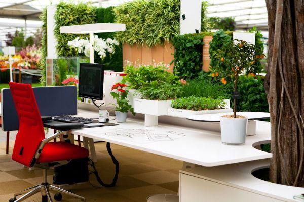 5 способов создать экологически чистый офис
