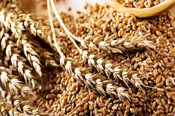 Россия нарастила объемы экспорта пшеницы