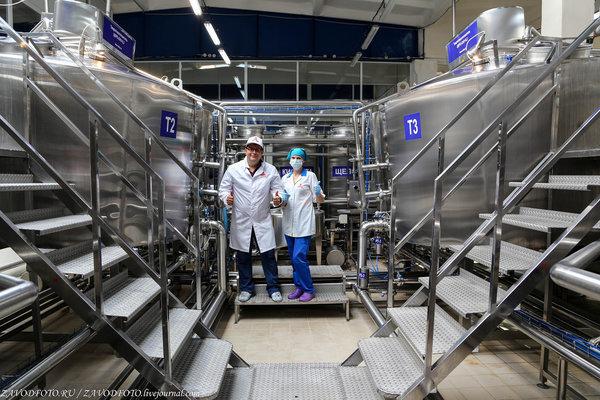 В Оренбуржье начал работу крупнейший  молочный комплекс