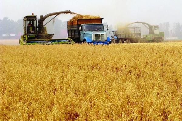 Сбор зерна в России почти на 6% обогнал показатели 2018 года
