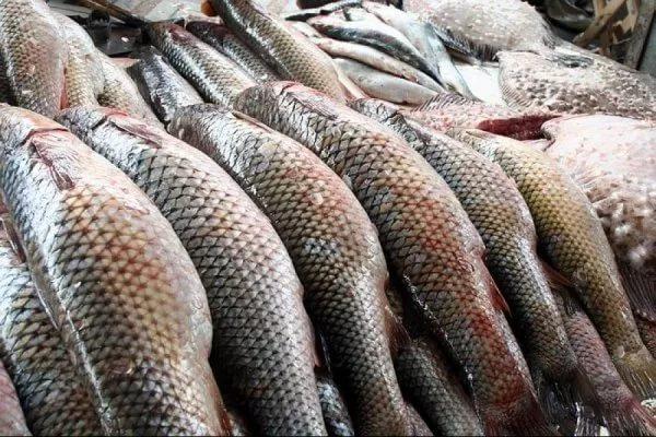 Аргентина планирует удвоить в два раза поставки рыбы в РФ