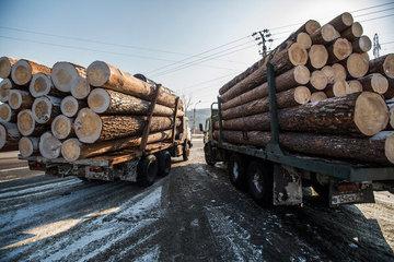 В России могут ввести полный запрет на экспорт леса в Китай